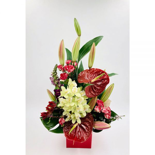 Red Anthurium 1