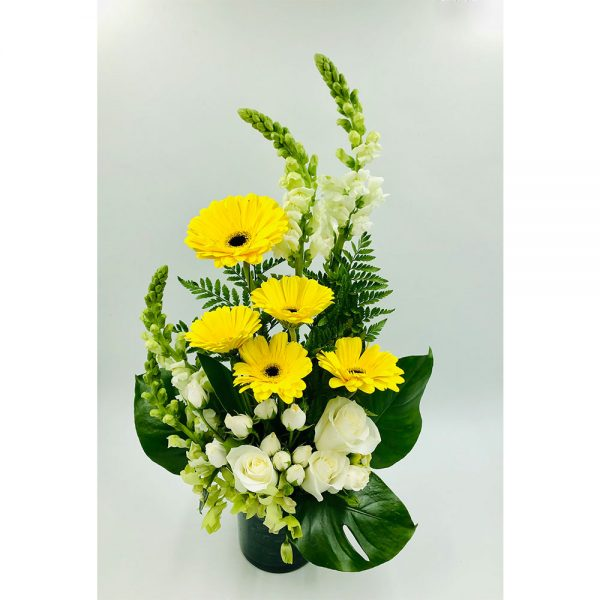 Yellow gerberas 1